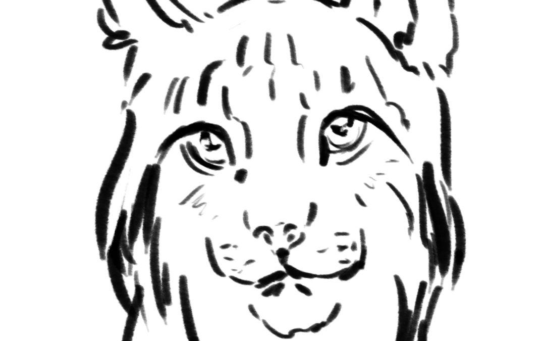 Lettre d'actualités « Lynx boréal, nouvelles d'ici et d'ailleurs » n°2